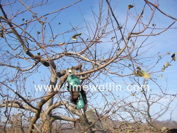 Electric Pruning Shears grape pruning video
